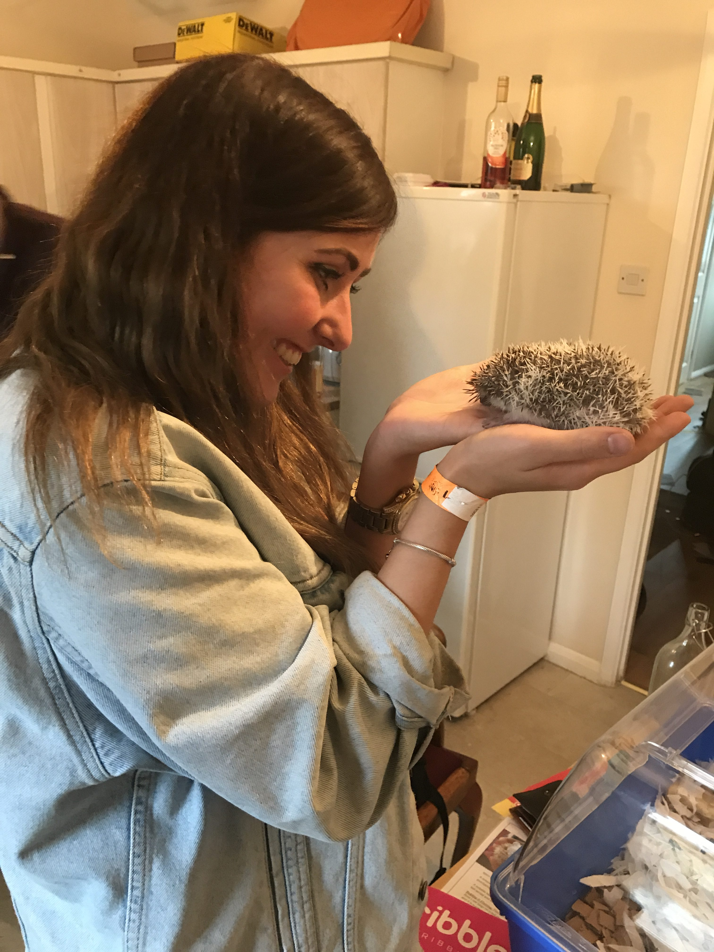 Meeting Henlo For the first time! Hedgehog, Charlotte Rick